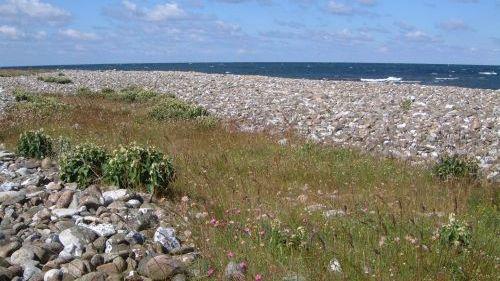 Stenet strandvold på Hesselø. Fotograf: Mogens Holmen
