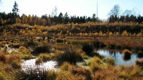 Vådområde ved Lille Gribsø. Fotograf: Mogens Holmen