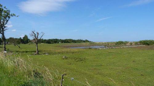 Hestegræsset rigkær og tidvis våd eng ved Flyndersø. Fotograf: Peter Leth