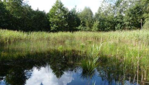 Kransnålalge-sø i Løgtved Mose. Fotograf: Peter Leth