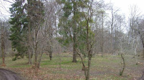 Skovengen Kaspersens slette i Allindelille Fredskov. Fotograf: Hans Christian Jessen